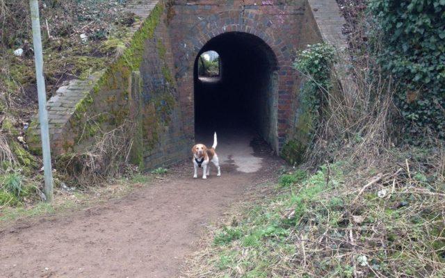 Ivel Springs, Baldock Dog walk in Hertfordshire