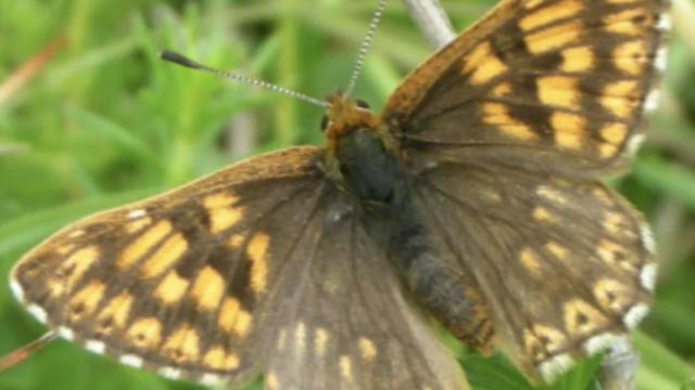 Dog walk at Ivinghoe Hills Butterfly Walk
