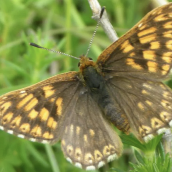 Ivinghoe Hills Butterfly Walk photo 1