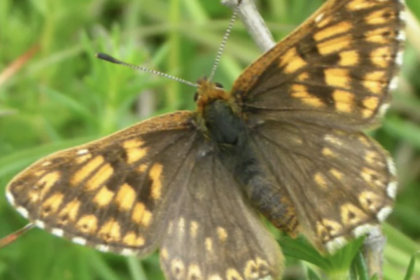 Ivinghoe Hills Butterfly Walkphoto