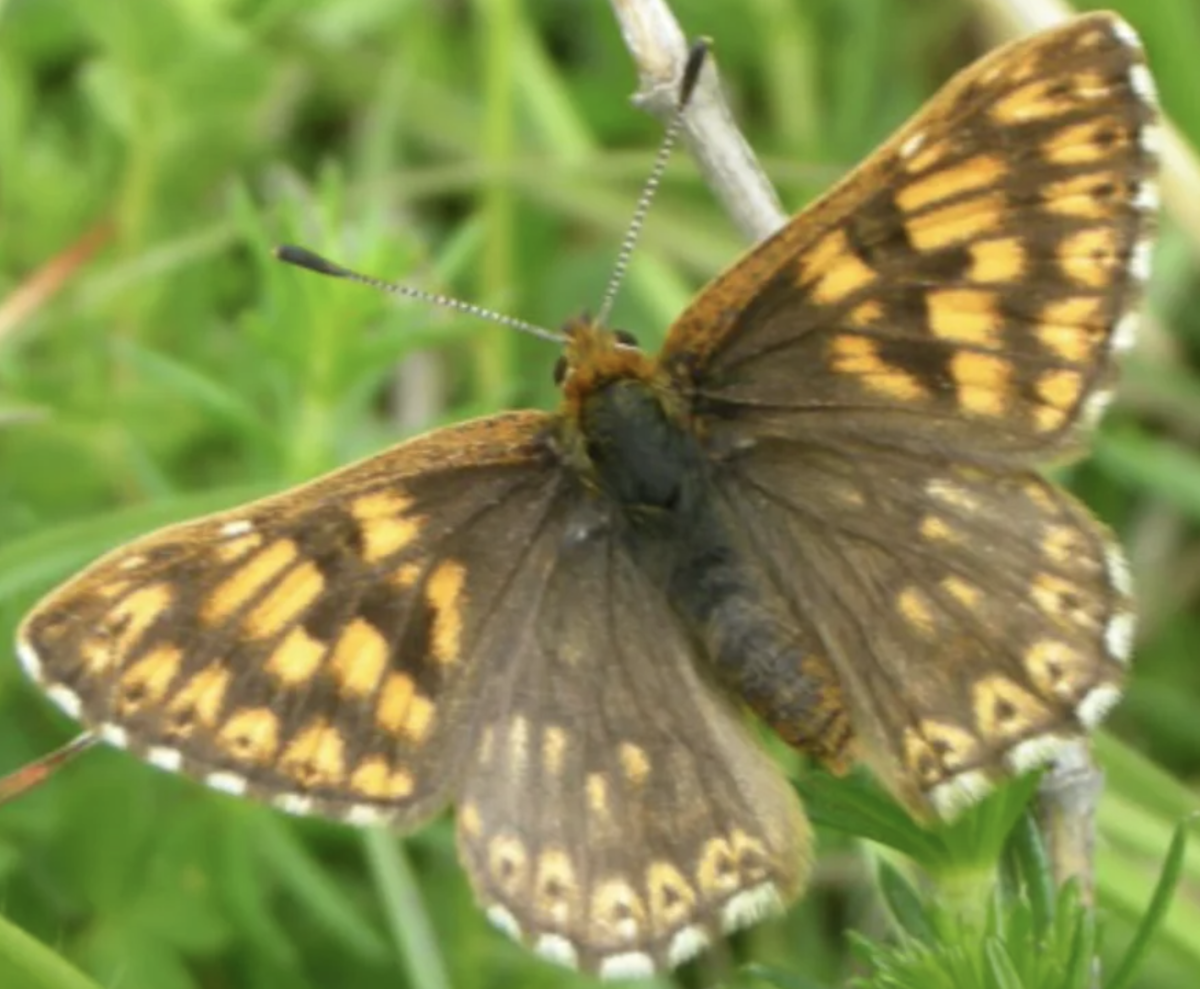 Ivinghoe Hills Butterfly Walk large photo 1