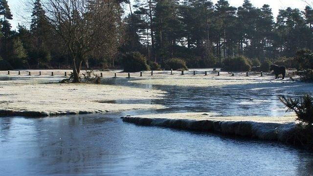 Dog walk at Janesmoor Pond