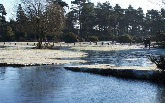Janesmoor Pond Dog walk in Hampshire