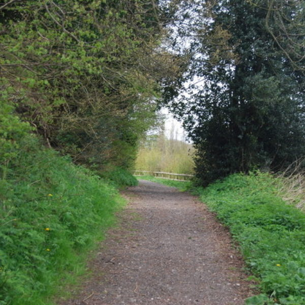 Dog walk at Jeskyns Country Park, Gravesend