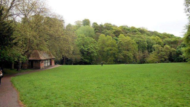 Dog walk at Jesmond Dene Park