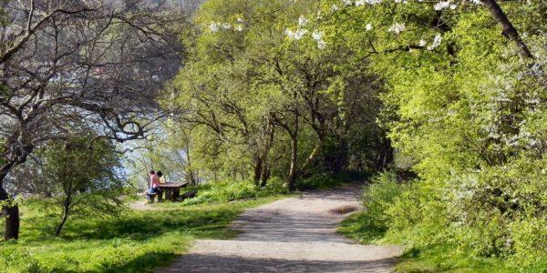 Jumbles Country Park