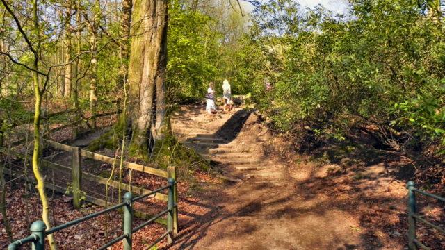 Dog walk at Jumbles Country Park