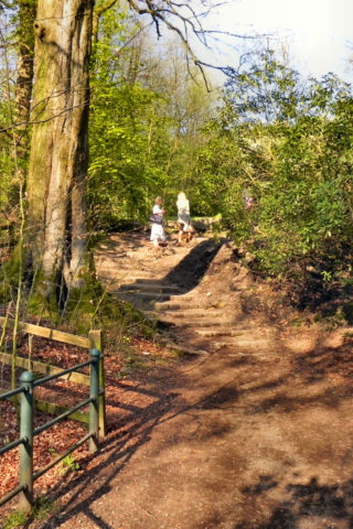 Dog walk at Jumbles Country Park photo