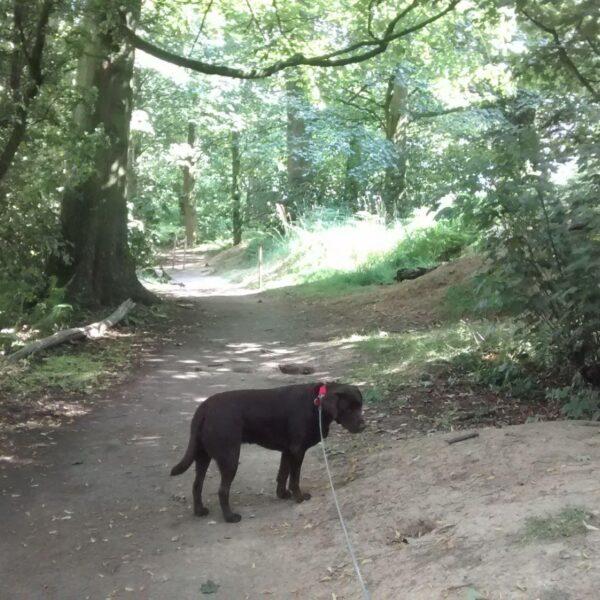 Dog walk at Kedleston Hall And Estate