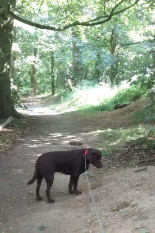 Dog walk at Kedleston Hall And Estate photo