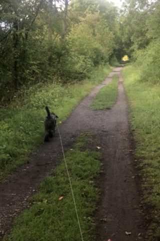Dog walk at Kelmarsh Tunnels photo