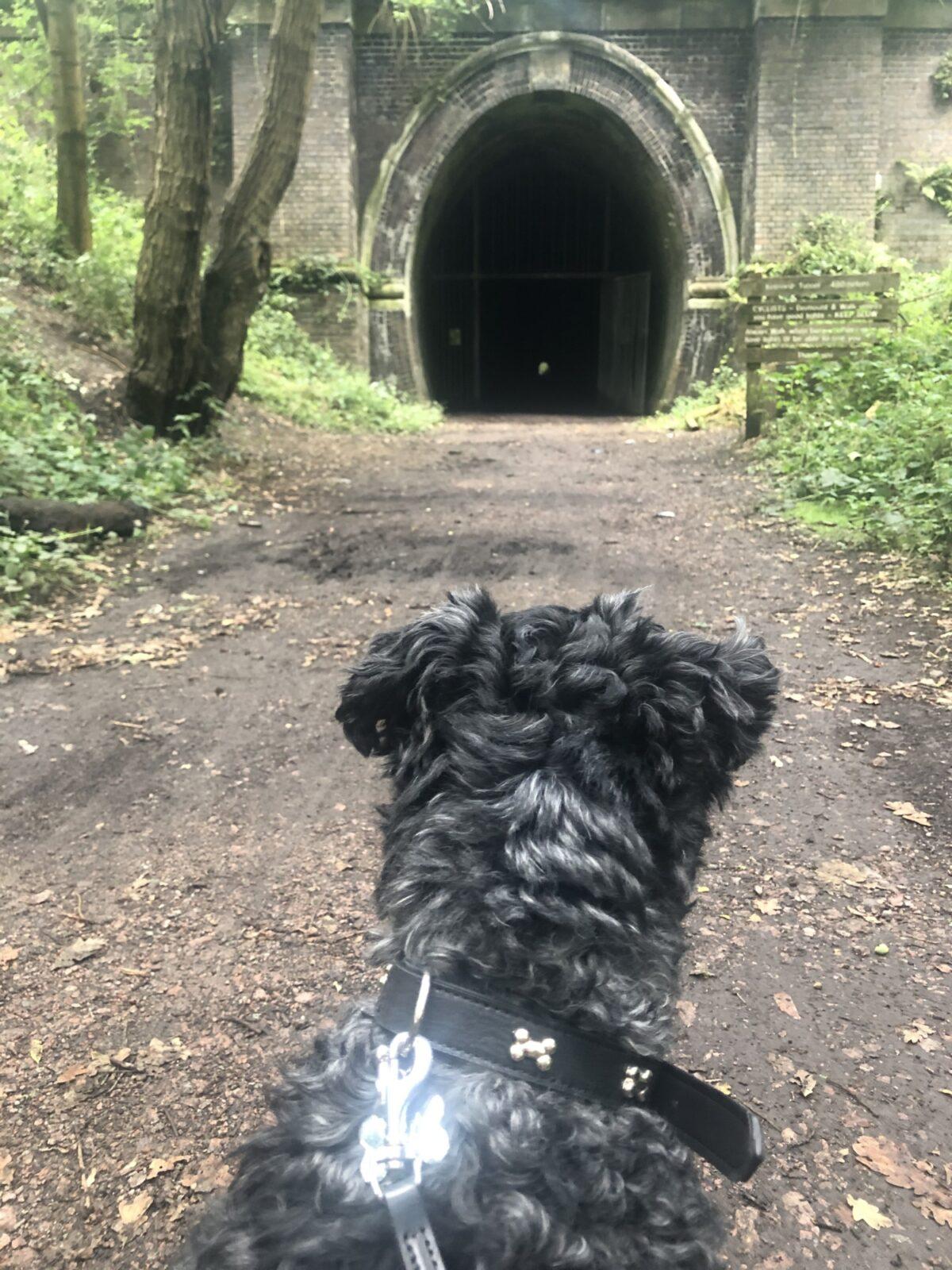Kelmarsh Tunnels large photo 4
