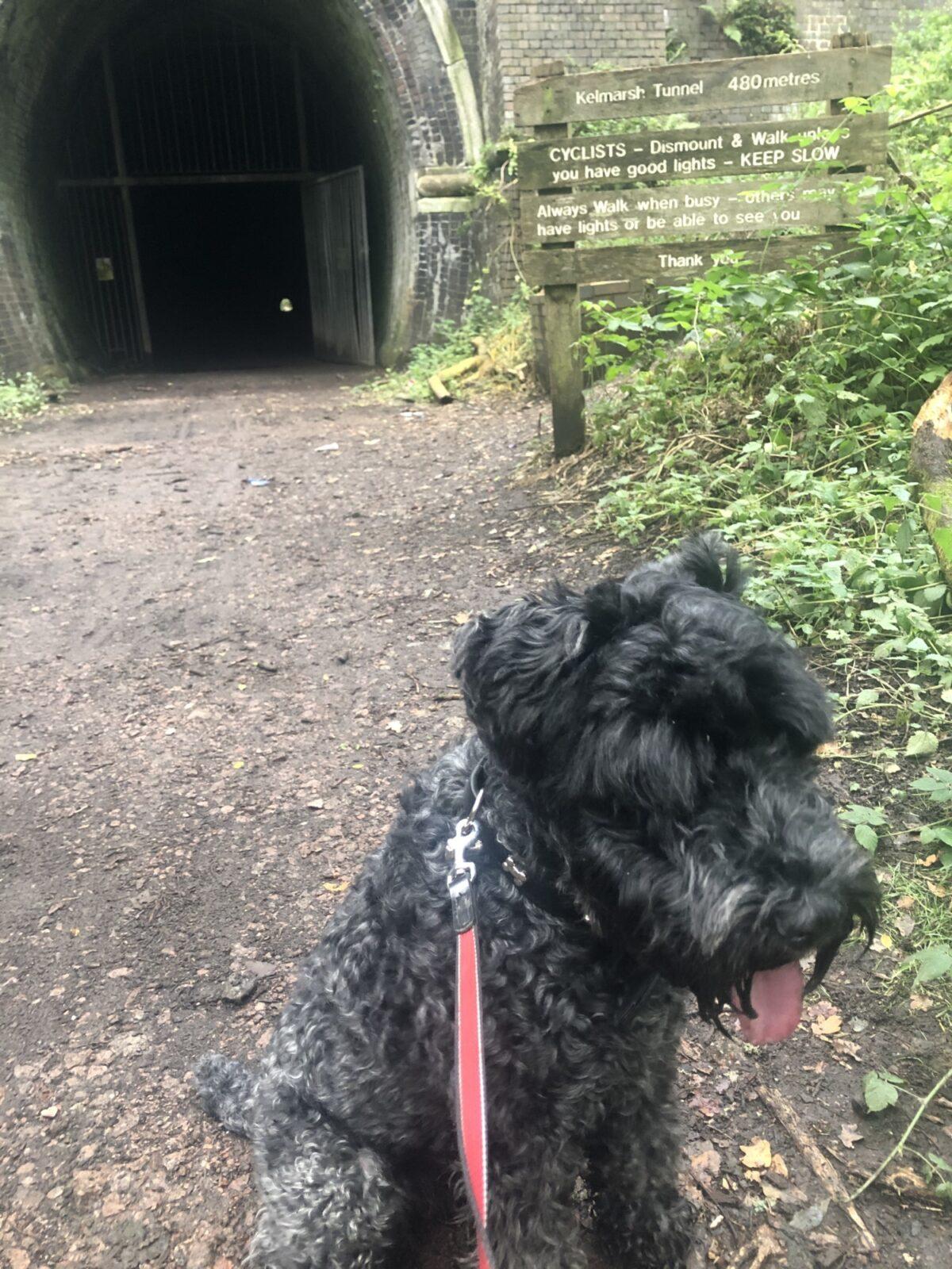 Kelmarsh Tunnels large photo 7