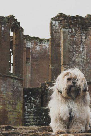 Dog walk at Kenilworth Castle And Elizabethan Garden photo