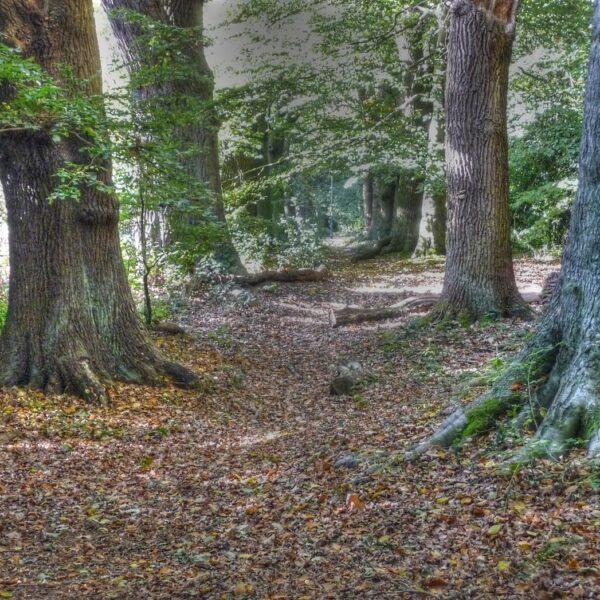 Dog walk at Kenilworth Road Woodlands
