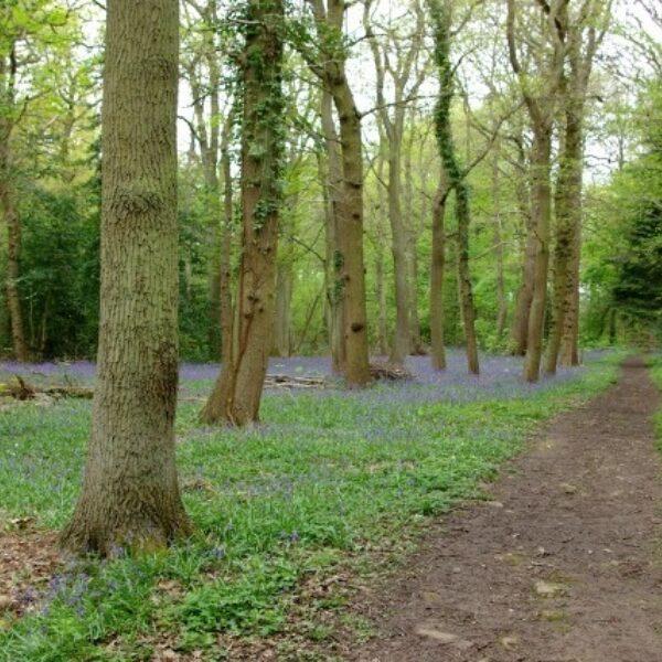 Kenilworth Road Woodlands photo 3