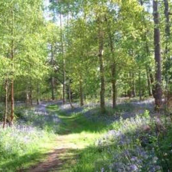 Kenilworth Road Woodlands photo 2