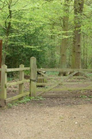 Dog walk at Kenilworth Road Woodlands photo