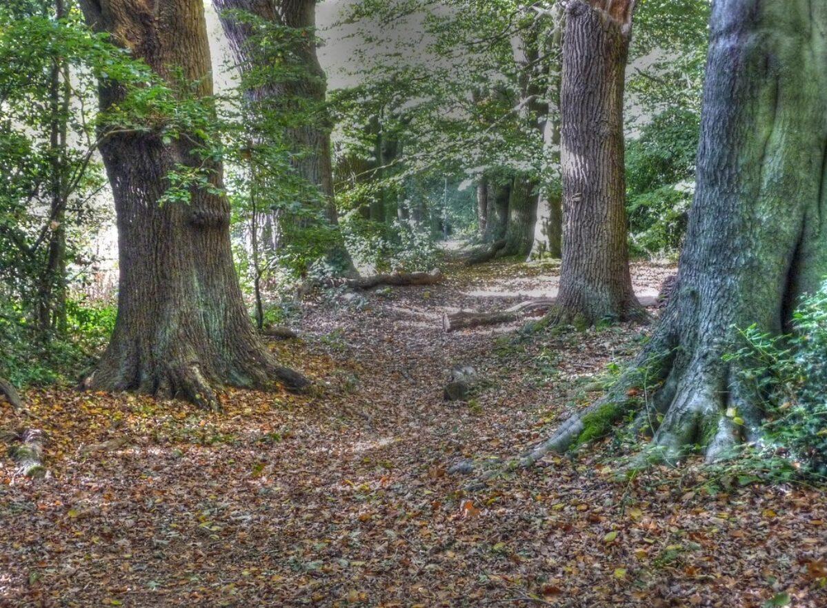 Kenilworth Road Woodlands large photo 5