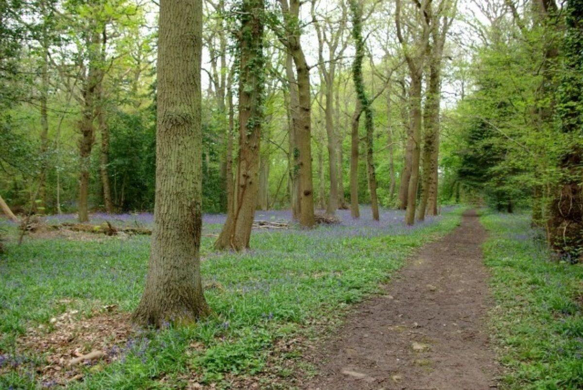 Kenilworth Road Woodlands large photo 3