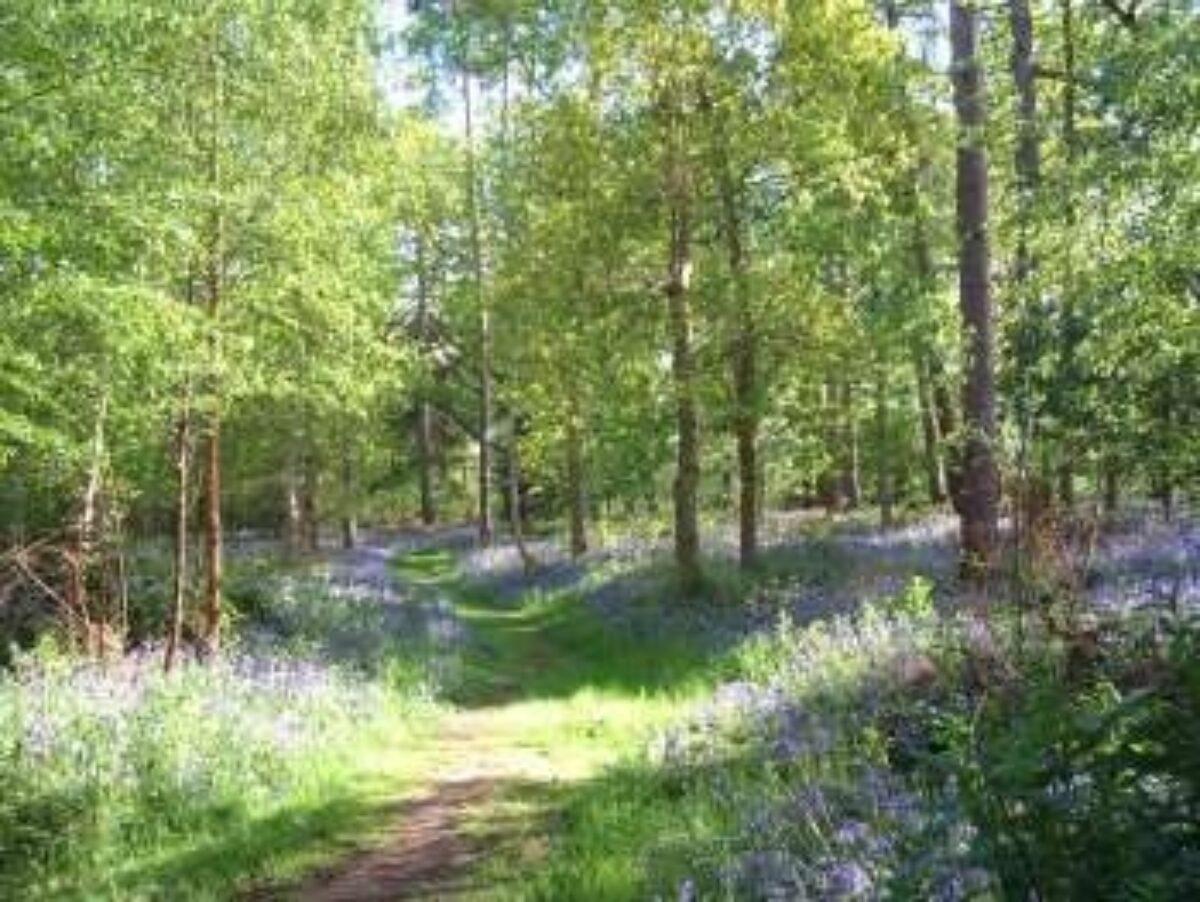 Kenilworth Road Woodlands large photo 2