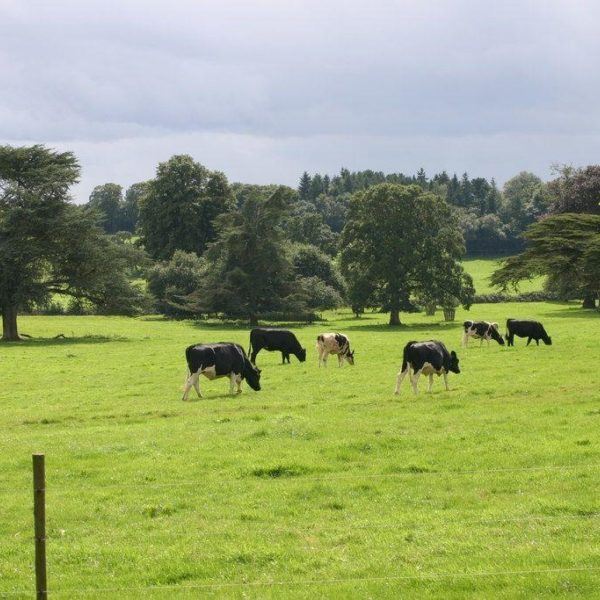 Dog walk at Killerton House