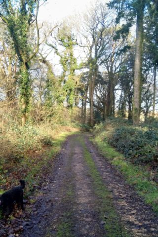 Dog walk at Kimbridge circuit via Dunbridge photo