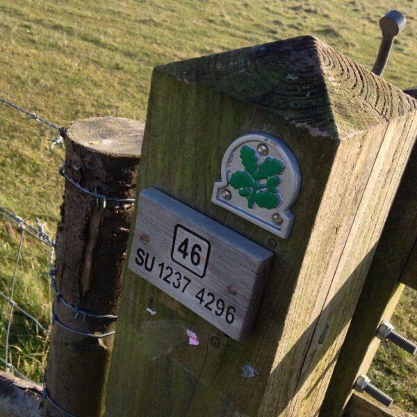 Dog walk at King Barrow Ridge - Stonehenge - Carcus Walk