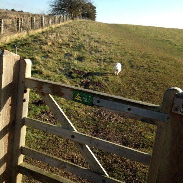 King Barrow Ridge - Stonehenge - Carcus Walk photo 18