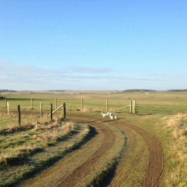 King Barrow Ridge - Stonehenge - Carcus Walk photo 5