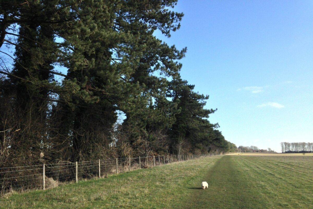King Barrow Ridge - Stonehenge - Carcus Walk large photo 19