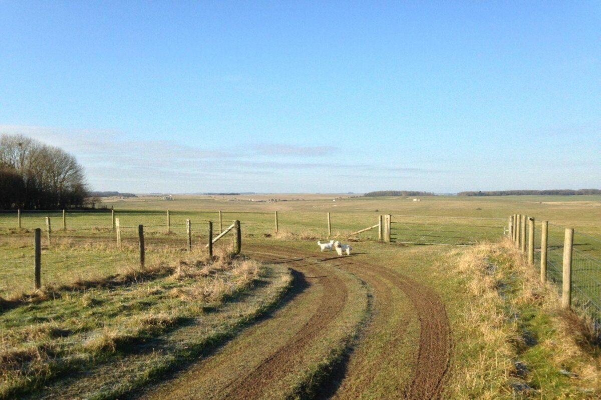 King Barrow Ridge - Stonehenge - Carcus Walk large photo 5