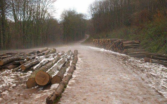 Kings Cliff Dog walk in Somerset