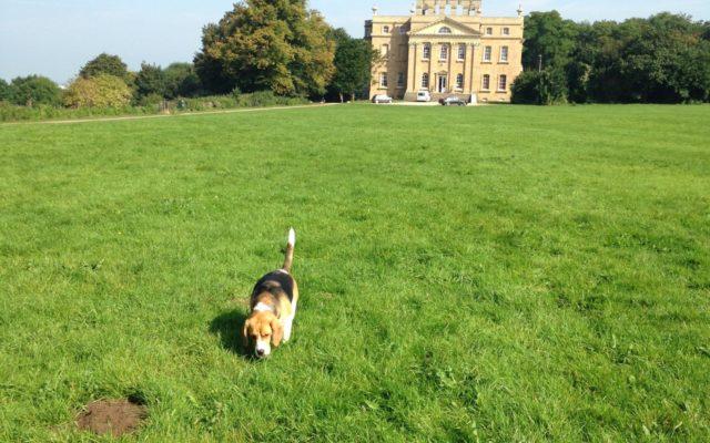 Kings Weston, Bristol Dog walk in Avon