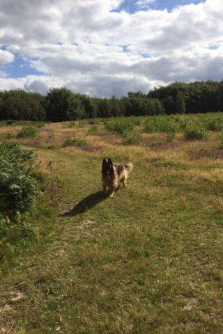 Dog walk at Kings Wood photo