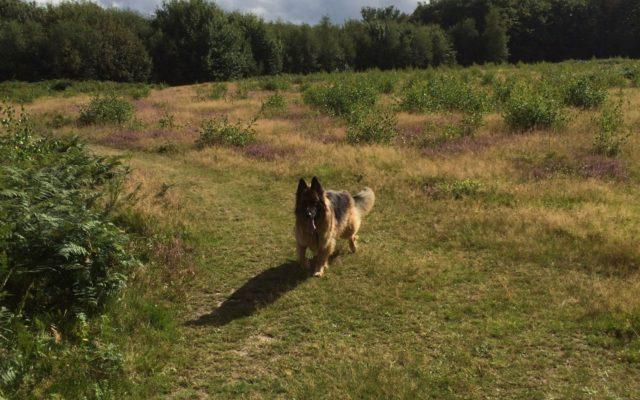 Kings Wood Dog walk in Kent