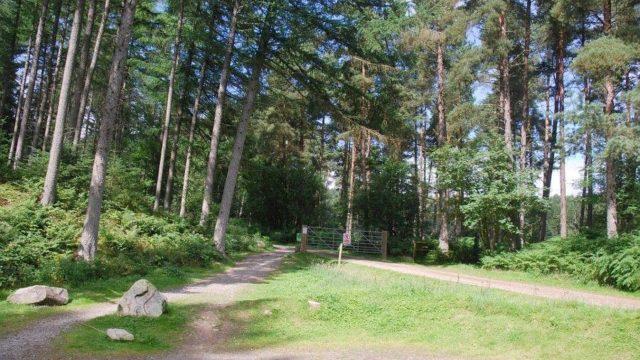 Dog walk at Kirkhill Forest