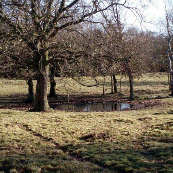 Knettishall Heath photo 3