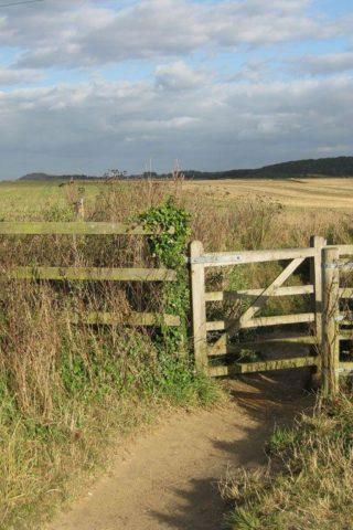 Dog walk at Knettishall Heath photo