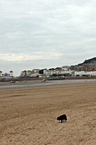 Dog walk at Knightstone Beach Walk photo