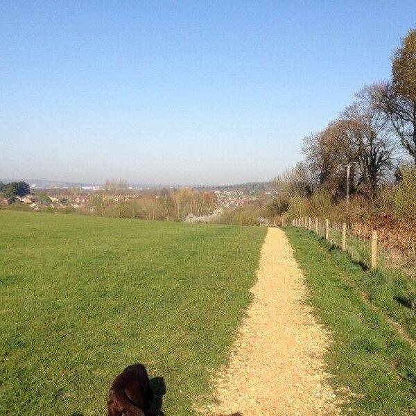 Dog walk at Knowle Park, Fair Oak