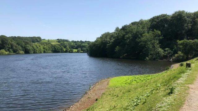 Dog walk at Knypersley Reservoir