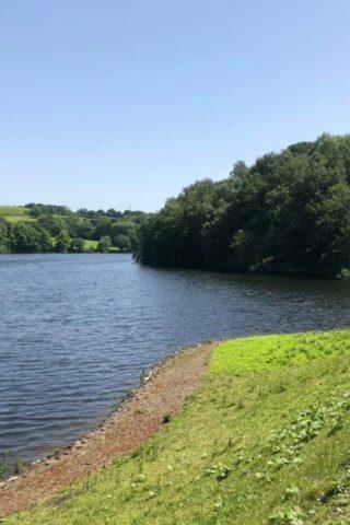 Dog walk at Knypersley Reservoir photo