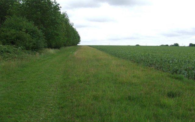 Lady's Walk Dog walk in Cambridgeshire
