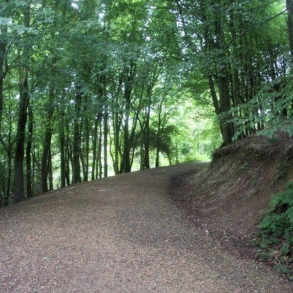Dog walk at Langdon Hill / Woods