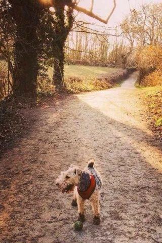 Dog walk at Langdon Hills Country Park (Westley Heights) photo