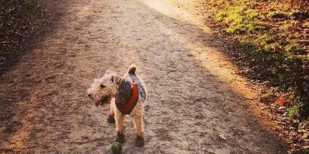 Dog walk at Langdon Hills Country Park (westley Heights