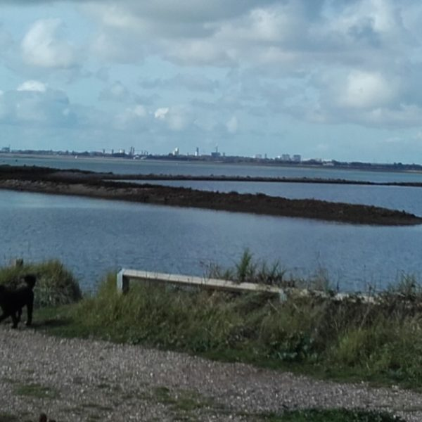 Dog walk at Langstone Harbour and Hayling Island