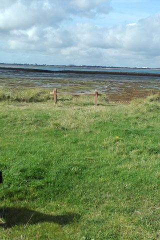 Dog walk at Langstone Harbour and Hayling Island photo