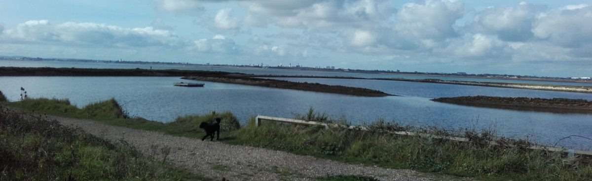Langstone Harbour and Hayling Island large photo 3